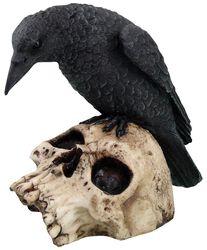 Ravens Remains - Rabe auf Totenschädel