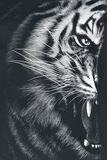 Tiger Wrap