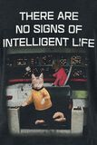 Cats - Intelligent Life