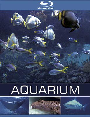 Exotisches salzwasser aquarium blu ray for Salzwasser aquarium