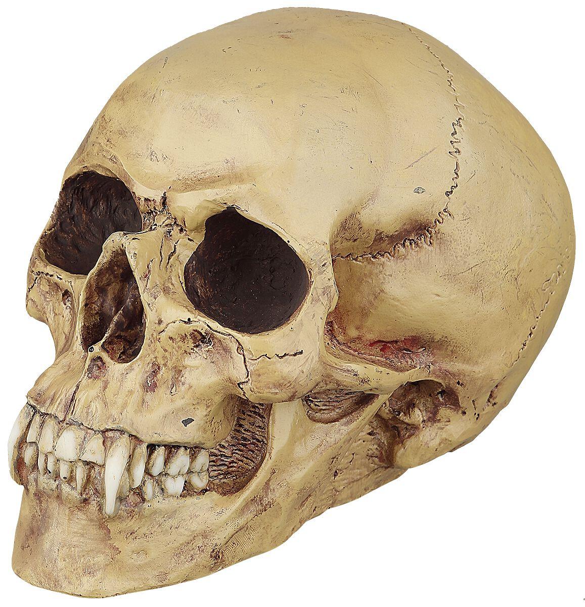 Vampire skull   markus mayer   schedel   kunststeen